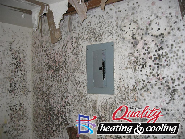 Mold remediation company in Cleveland, Ohio.
